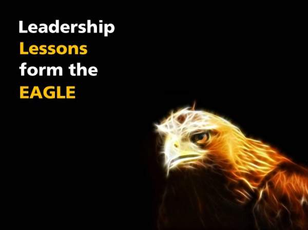 Eagle Story   E-learning Examples   E learning demos
